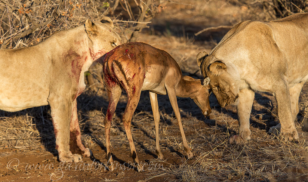 matlapa and jamala kill impala 6