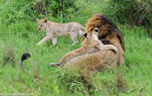 Chimbro and Cubs