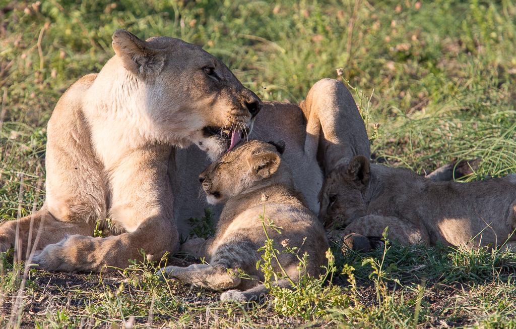 mica and jamala cubs 1