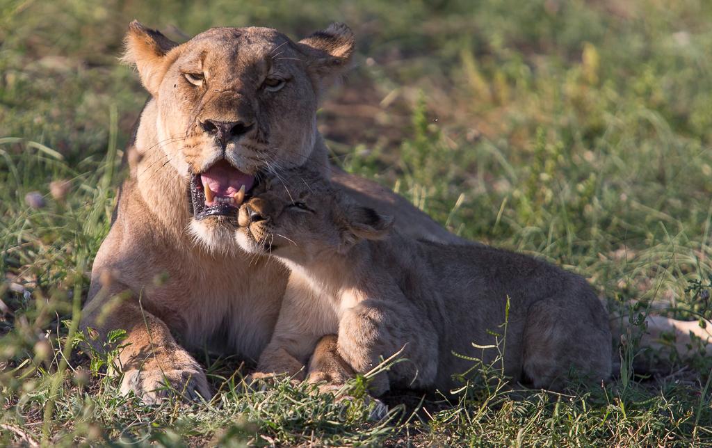 mica and jamala cubs 2