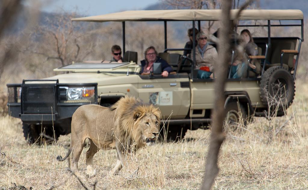 bafefo-kills-paralised-wildebeest-7