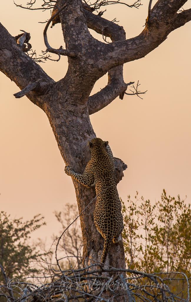 tsala-tree-climbing-1