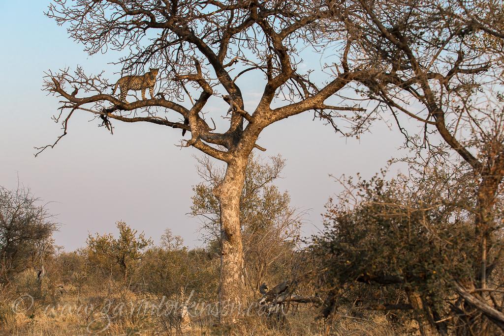 tsala-tree-climbing-2