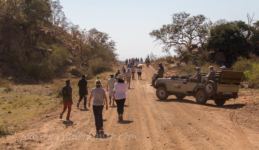rhino-walk-2