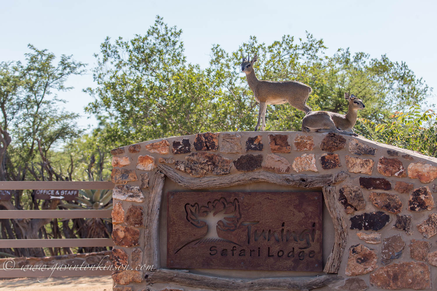 Klipspringer on lodge sign 1