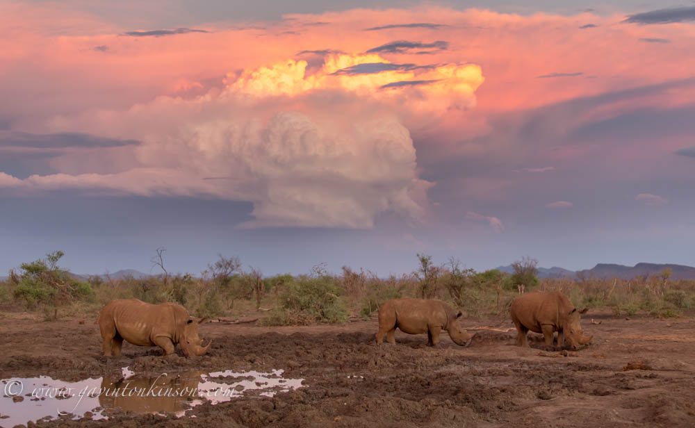 Rhino Sunset at Phakalane pan 1