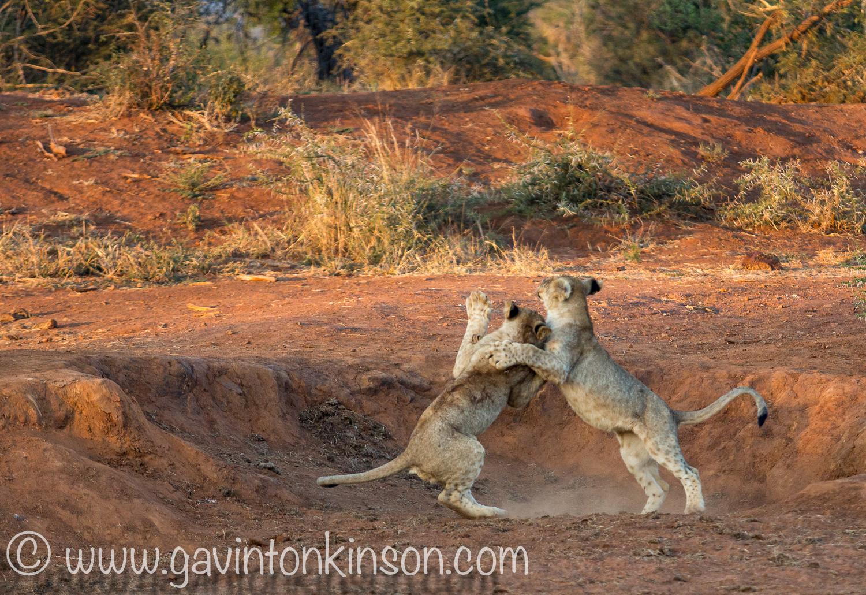 Jamala cubs play at quarry 1