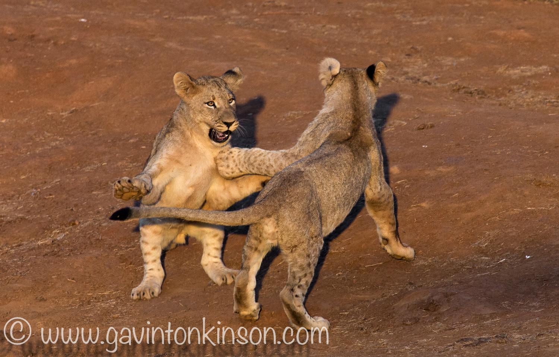 Jamala cubs play at quarry 2