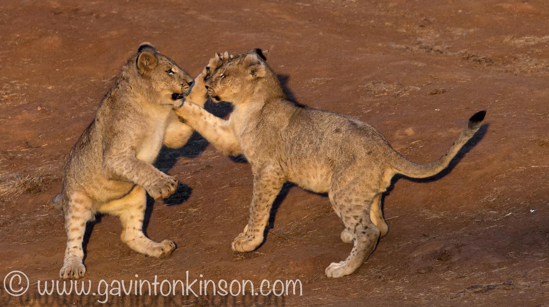 Jamala cubs play at quarry 3