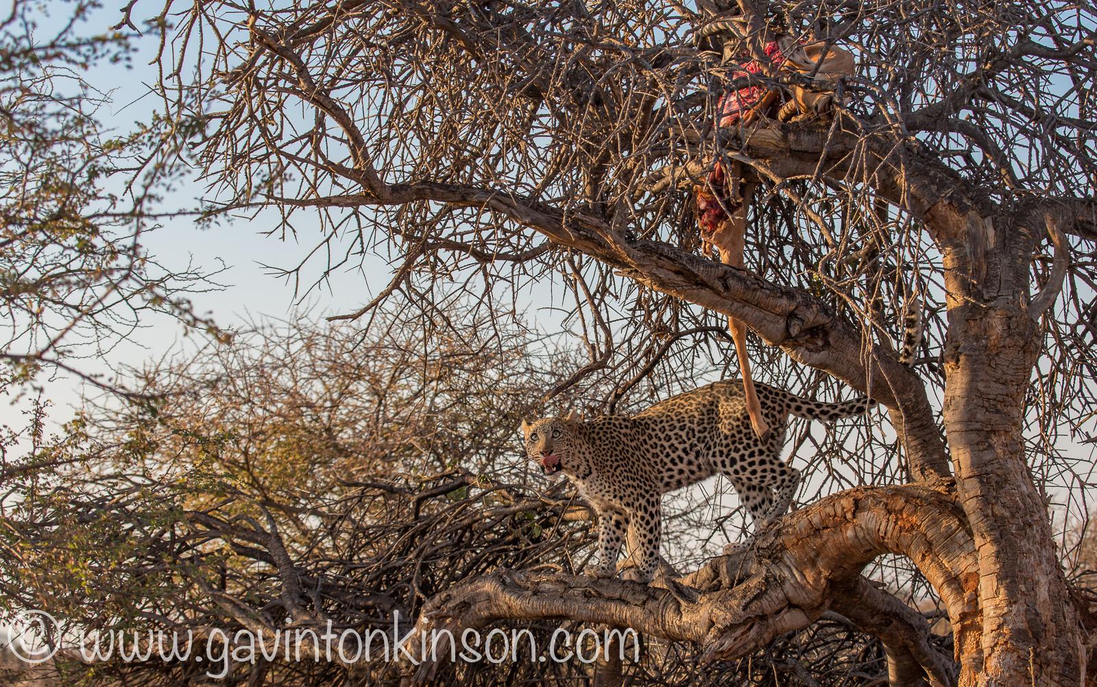 Dineo eats impala 1