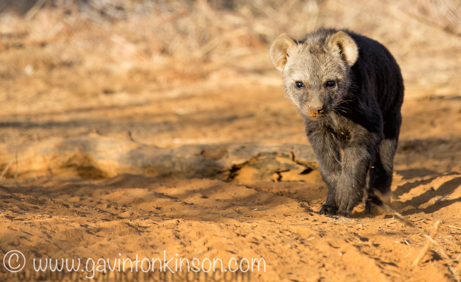 Hyenas at den 2