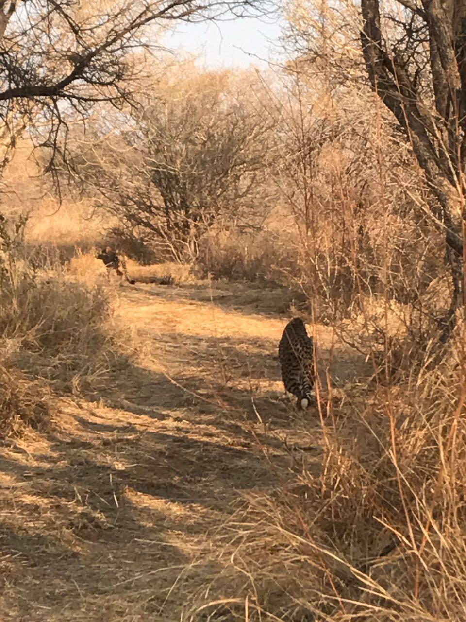 cheetah release 4