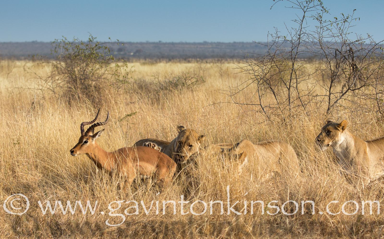 mica pride kill impala 1
