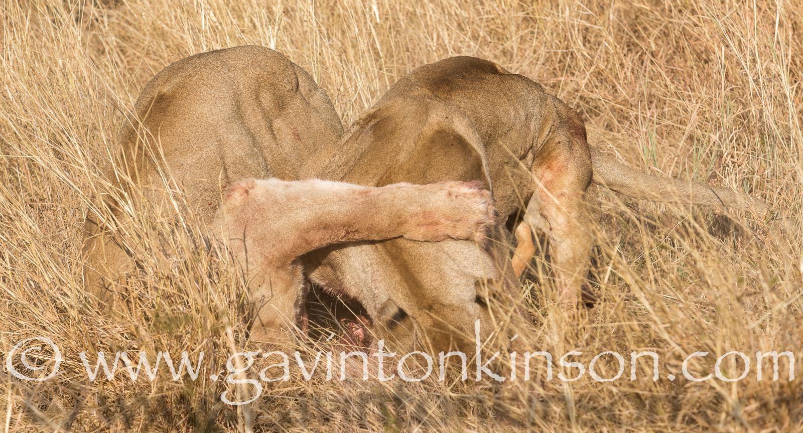 mica pride kill impala 11