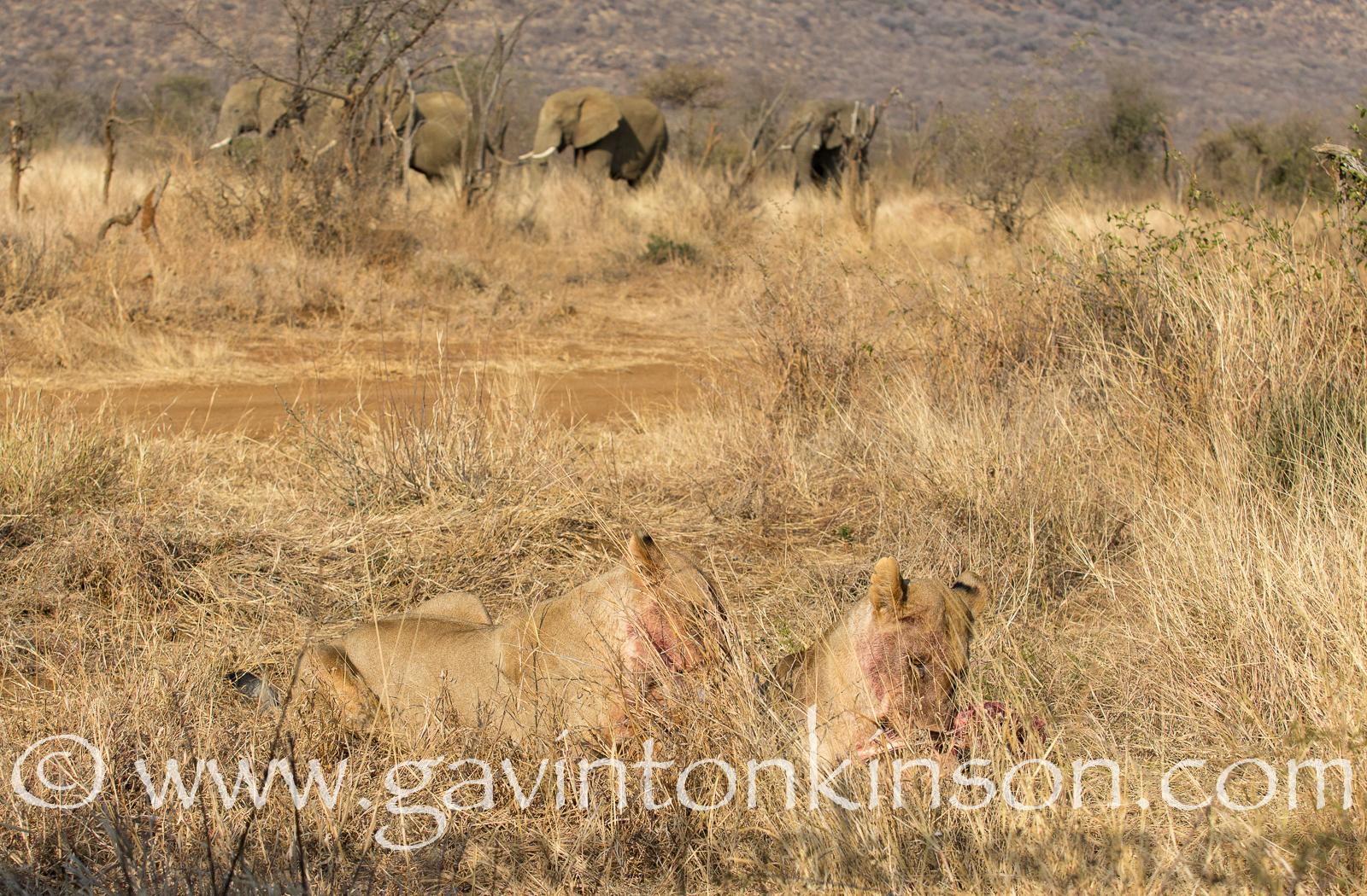 mica pride kill impala 14