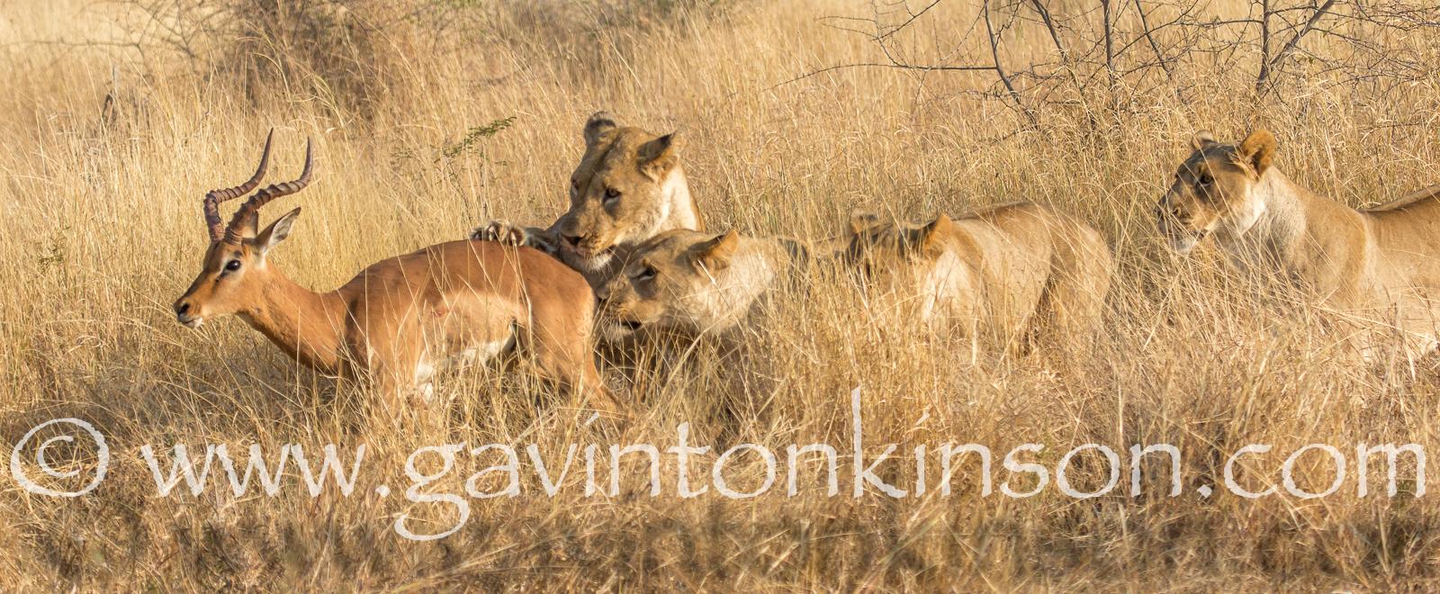 mica pride kill impala 2