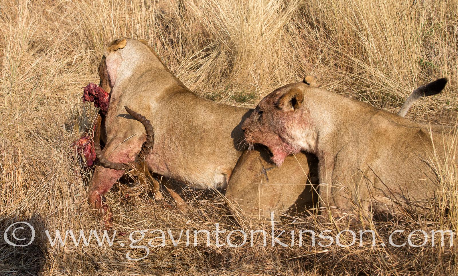 mica pride kill impala 7
