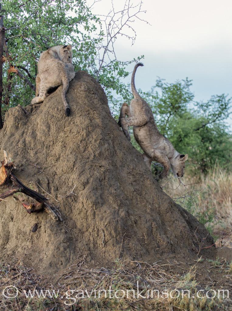 Cubs on mound 2