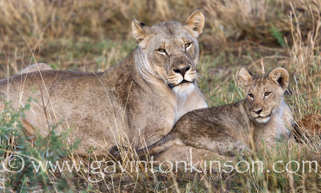 Cubs on mound 3