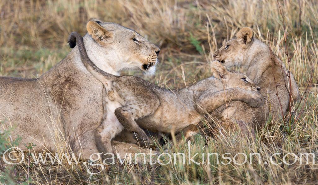 Cubs on mound 4