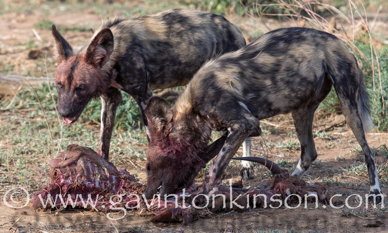 break pack eat impala 1